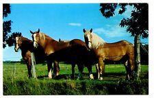 Horses Vintage Postcard Field Fence Grazing Blue Sky Farm Unposted