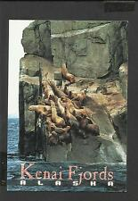 Colour Postcard Steller Sea Lions Kenai Fjords Alaska  unposted