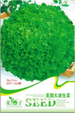 Original Package 100 Romaine Lettuce Seeds USA High Speed Lactuca Sativa C113