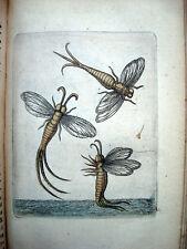 Histoire Naturelle INSECTES par GOEDAERT 1677 Tome III avec  Planches couleurs