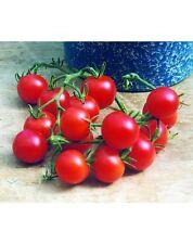 50 Graines de TOMATE CERISE Gardeners Delight / Montplaisir /Délice du Jardinier