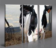 Kühe V4 3 Bilder Kuh Landschaft Tier auf Leinwand Wandbild Poster
