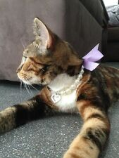 Pearl, Crystal with Bow Necklace Collar for Puppy Dog or Cat / Kitten in Large