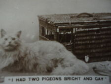"""Photo Cute Funny """" They'll Put Us in the Dustbin """" Kittens B/W Cig Card Vintage"""