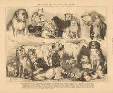 England, Dog Show, Pug, Bulldog, Russian Wolfhound, Dachshund, Vintage 1874 Art