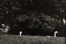 Bernard Descamps - Cygnes - Vintage Photography Agence Vu Kertesz Niepce Voyage