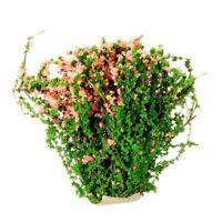 Miniature Plants Fairy Garden Accessories Dollhouse Ornament Deco WS XV
