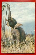 Elephant Vintage Postcard 4339