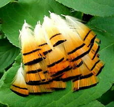 20 Golden Pheasant Tippet Neck Plumage Feathers - US Seller