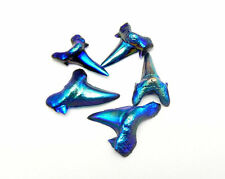 Shark Tooth Real Shark Tooth Blue Mystic Titanium Amazing rk13b4