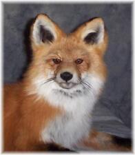 BEAUTIFUL ALASKAN RED FOX TAXIDERMY MOUNT WILDLIFE ART
