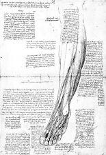 LEONARDO DA VINCI muscoli della parte inferiore della gamba ANATOMIA Poster Art Print
