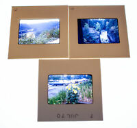 Vintage 35mm Photo Transparency Slides - Nature 1970 | Lot of 3