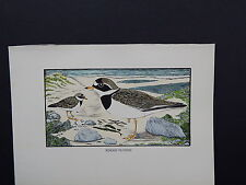 BIRDS, ERIC FITCH DAGLISH, Engraving, c. 1948 Ringed Plovers #14