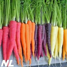 100Pcs Carrot Seeds 5 Species Vegetables Organic Garden Tasty Nutritious Product