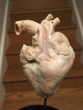 Plastinated Half Pig Heart. Oddity. Oddities. Curio. Curiosity. Rare. Medical