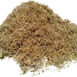 Loose Freeze Dried California Blackworms, Discus, Cichlids ALL Tropicals