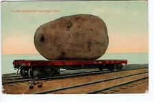 Vintage Exaggeration Postcard - Exaggerated Large Potato on Railroad Car