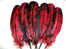 Eagle Hawk Owl Turkey Feather PARROT powwow smudge fan  regalia  [ red/black]