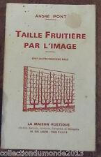TAILLE FRUITIÈRE PAR L'IMAGE 1948
