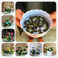 Water Plants 5 Pcs/bag Bonsai Water Hyacinth Flower Plants Lotus Live Hyacinth F