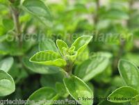 Majoran * 100 Samen * Kräuter +Gewürzpflanze * mehrjährig * mediterran