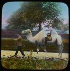 ANTIQUE Magic Lantern Slide CHILDREN RIDING A CAMEL AT THE ZOO C1910 PHOTO