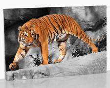 Animals Contemporary Art Framed Art Prints