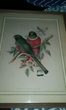 J GOULD Antique Lithograph hand colored Red Trogon Elegans Birds 1800's