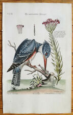 SELIGMANN Original Large Print American Kingfisher - 1755