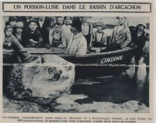 1924  --  UN POISSON LUNE DANS LE BASSIN D ARCACHON   3F441