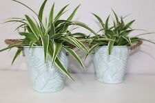 2 x Green Metal Plant Pots Planter Herbs Indoor Houseplant Decorative Containers