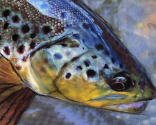Brown Trout Fishing Art Print, Fly Fisherman Gift, Hand Signed by Artist A4 A3