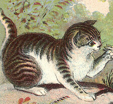 1880's HUNGRY CAT, ANGRY MOM BIRD, NORTHAMPTON MA, ASTC SHOES TRADE CARD, TC429