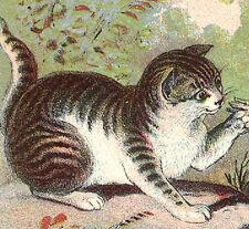 1880's HUNGRY CAT, ANGRY MOM BIRD, NORTHAMPTON MA, ASTC SHOES TRADE CARD, TC429
