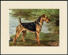 AIREDALE TERRIER STANDING DOG LOVELY DOG PRINT MOUNTED READY TO FRAME