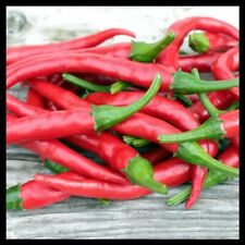 Cayenne Pepper Seeds | Pepper Seeds for Planting Home Gardens | Non-Gmo