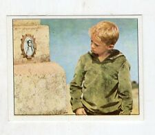 figurina - PANINI PINOCCHIO 1972 - numero 233