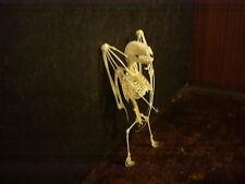 Small Taxidermy Bat Skeleton  Art Home wares Bar ware Weird Stuff Skull vampire