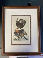 JJ Audubon Caracara Eagle Original Antique Print 1838