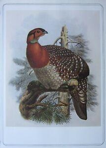 BEAUTIFUL BIRD PRINT ~ BLYTH'S TRAGOPAN ~ JOSEF WOLF