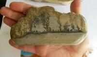 Cotham Marble slice fossil algae stromatolite from Sommerset Bristol UK ba224