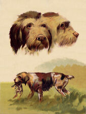 ITALIAN SPINONE LOVELY DOG GREETINGS NOTE CARD DOGS HEAD STUDY & STANDING DOG