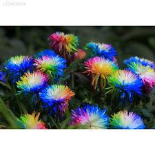 0373 100Pcs Rare Rainbow Chrysanthemum Daisy Indoor Flowers Seeds Plant Bonsai G