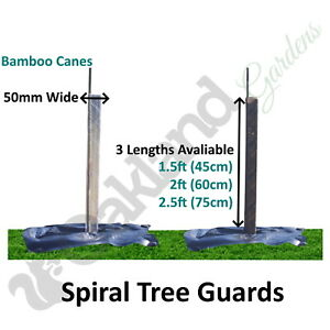 Spiral Tree Guards 50mm Shelters Protectors Rabbit Hedge + Bamboo Canes Saplings