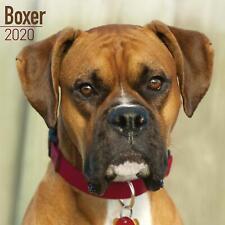 Boxer 2020 Official Square Wall Calendar