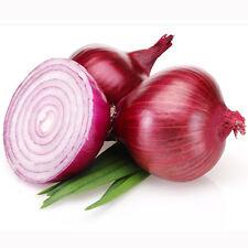 20 Red Onion Seeds Allium Cepa Bulb Onion Organic Vegetables