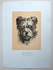 Emile, der Hund von Mont-Saint-Bernard - Holzstich von J. Goossens um 1895