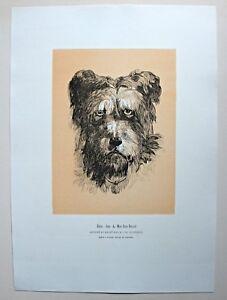 Emile, der Hund von Mont-Saint-Bernard - Stich, Holzstich v. J. Goossens um 1895