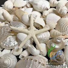 SHELLS MIX white & Pearl  500g 2-6cm for craft, wedding,home and aquarium decor.